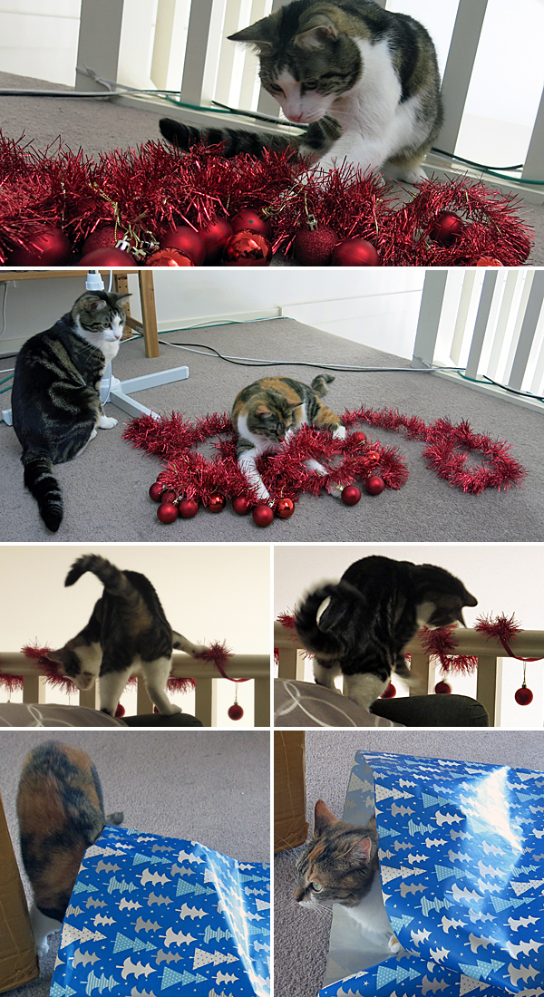No presents this year, only re-gifted Helpercats.