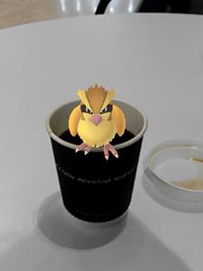 Pokémon GO Pidgey
