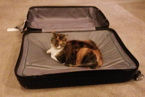 luggage-hammock